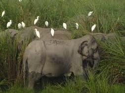 rhino and tickbird symbiotic relationship